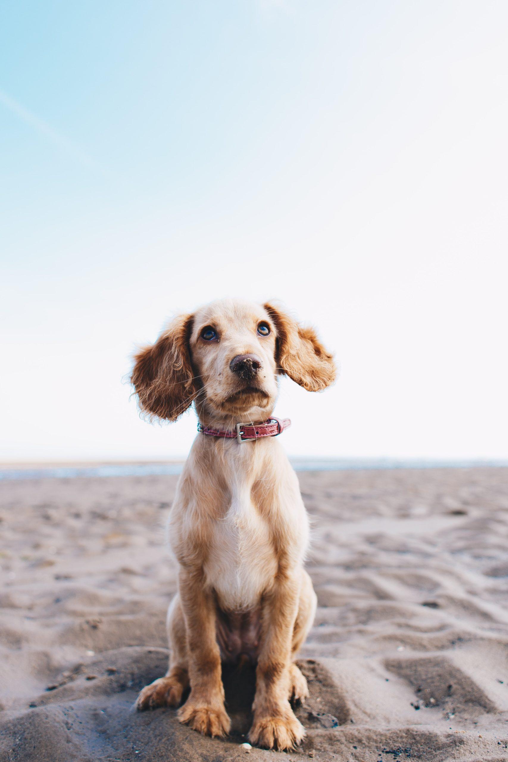 dog sitting on beach